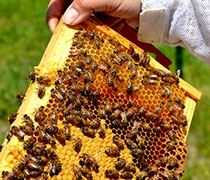 Apiary Abuzz: Bee Project at GCC enjoys sweet success