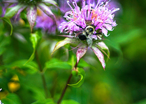 What's the buzz? A pollinator-friendly garden at the Grove